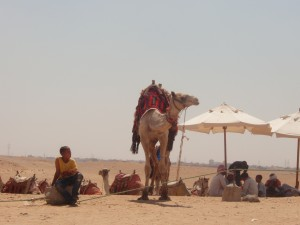 Boy with a camel